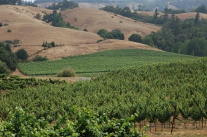 The Vineyards of Mendocino Wine Country
