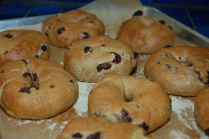 raisin bagels - fromage, anyone?