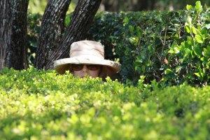 H_bushes